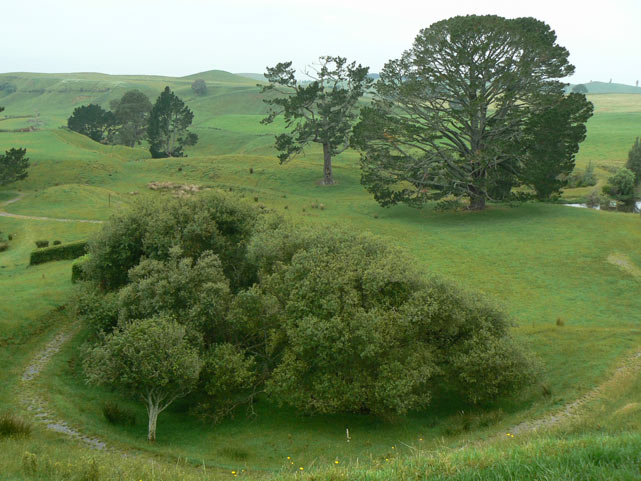 Matamata - Hobbiton - Party Tree