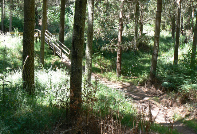 Wairake Forest - Craters Of The Moon - Taupo - Nouvelle-Zélande