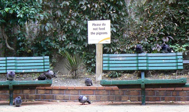 Please do not feed the pigeons